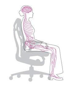 silla embody circulación
